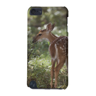 White-tailed Deer, Odocoileus virginianus, 2 iPod Touch 5G Cover