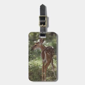White-tailed Deer, Odocoileus virginianus, 2 Luggage Tag