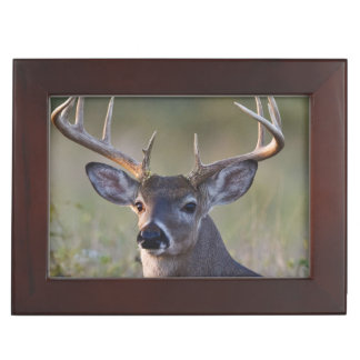 white-tailed deer Odocoileus virginianus) 2 Memory Boxes