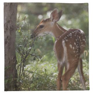 White-tailed Deer, Odocoileus virginianus, 2 Napkin