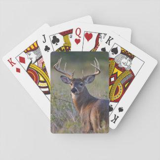 white-tailed deer Odocoileus virginianus) 2 Poker Deck