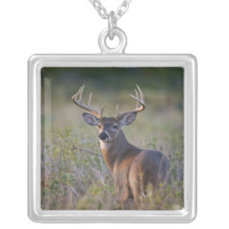 white-tailed deer Odocoileus virginianus) 2 Silver Plated Necklace