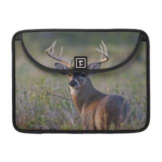 white-tailed deer Odocoileus virginianus) 2 Sleeves For MacBook Pro
