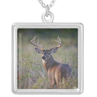 white-tailed deer Odocoileus virginianus) 2 Square Pendant Necklace