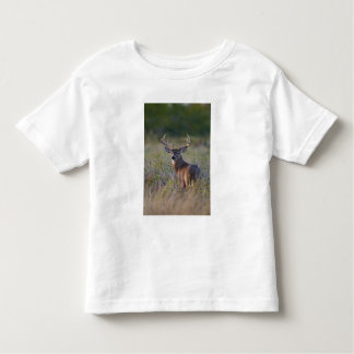 white-tailed deer Odocoileus virginianus) 2 Toddler T-Shirt