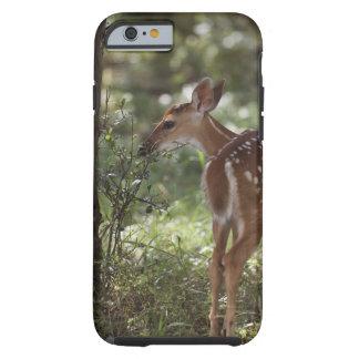 White-tailed Deer, Odocoileus virginianus, 2 Tough iPhone 6 Case