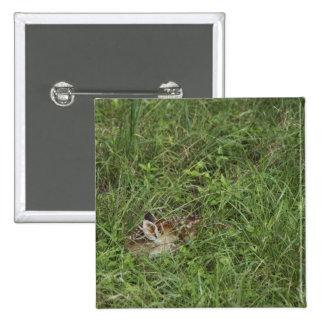 White-tailed Deer, Odocoileus virginianus, 3 15 Cm Square Badge