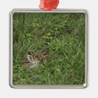 White-tailed Deer, Odocoileus virginianus, 3 Christmas Ornament