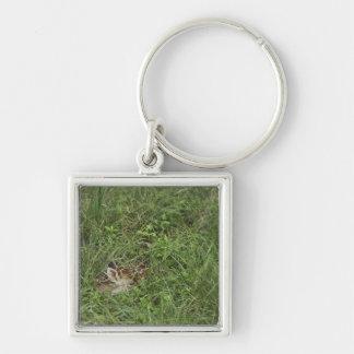 White-tailed Deer, Odocoileus virginianus, 3 Key Ring