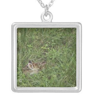 White-tailed Deer, Odocoileus virginianus, 3 Square Pendant Necklace