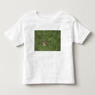White-tailed Deer, Odocoileus virginianus, 3 Toddler T-Shirt