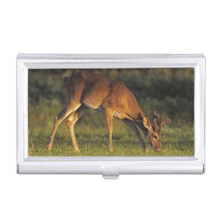 White-tailed Deer, Odocoileus virginianus, 4 Business Card Holder
