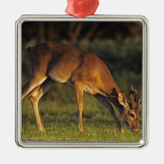 White-tailed Deer, Odocoileus virginianus, 4 Christmas Ornament