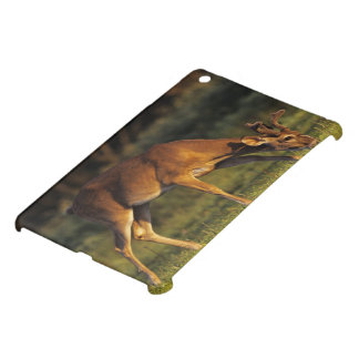 White-tailed Deer, Odocoileus virginianus, 4 iPad Mini Cover