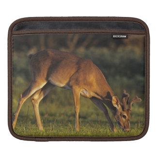 White-tailed Deer, Odocoileus virginianus, 4 iPad Sleeve