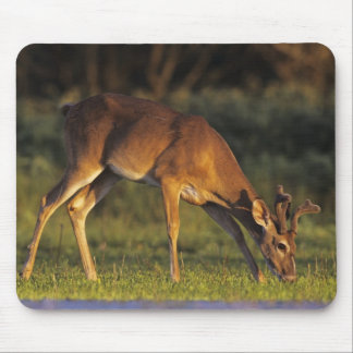White-tailed Deer, Odocoileus virginianus, 4 Mouse Mat