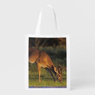 White-tailed Deer, Odocoileus virginianus, 4 Reusable Grocery Bag