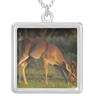 White-tailed Deer, Odocoileus virginianus, 4 Silver Plated Necklace