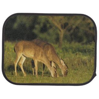 White-tailed Deer, Odocoileus virginianus, 5 Car Mat
