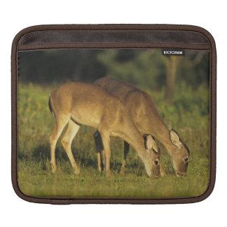 White-tailed Deer, Odocoileus virginianus, 5 iPad Sleeve