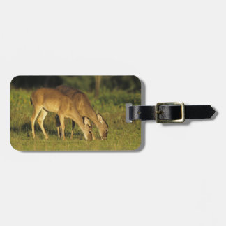 White-tailed Deer, Odocoileus virginianus, 5 Luggage Tag