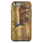 White-tailed Deer (Odocoileus virginianus) adult Tough iPhone 6 Case