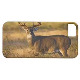 White-tailed Deer (Odocoileus virginianus) adult iPhone 5 Cover