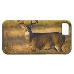 White-tailed Deer (Odocoileus virginianus) adult iPhone 5 Covers