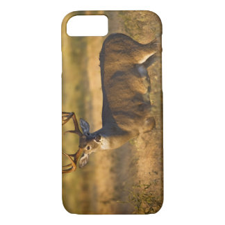 White-tailed Deer (Odocoileus virginianus) adult iPhone 8/7 Case