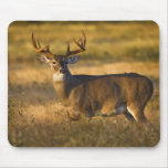 White-tailed Deer (Odocoileus virginianus) adult Mouse Pad