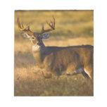 White-tailed Deer (Odocoileus virginianus) adult Memo Pads