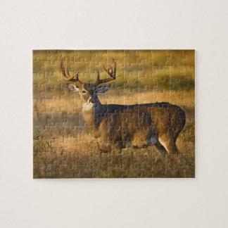White-tailed Deer (Odocoileus virginianus) adult Puzzle