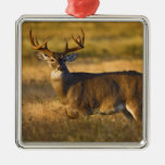 White-tailed Deer (Odocoileus virginianus) adult Silver-Colored Square Decoration