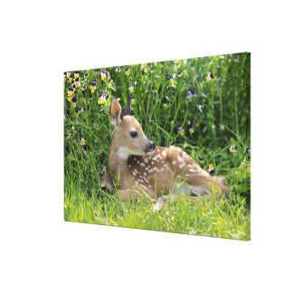 White-tailed Deer (Odocoileus virginianus) Canvas Print