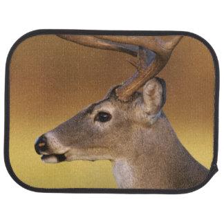 White-tailed Deer, Odocoileus virginianus, Car Mat