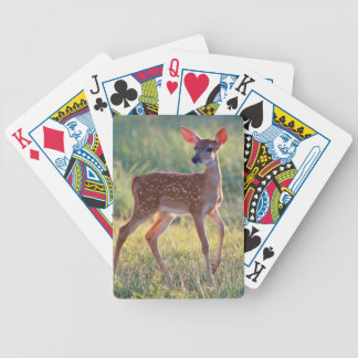 White-Tailed Deer (Odocoileus Virginianus) Fawn Bicycle Playing Cards