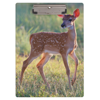 White-Tailed Deer (Odocoileus Virginianus) Fawn Clipboard