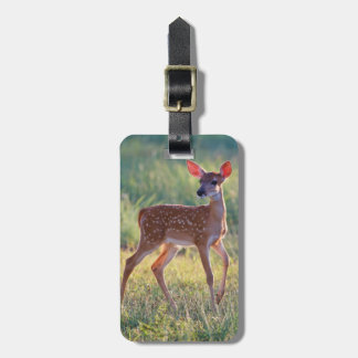 White-Tailed Deer (Odocoileus Virginianus) Fawn Luggage Tag