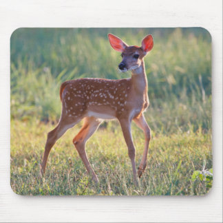 White-Tailed Deer (Odocoileus Virginianus) Fawn Mouse Mat