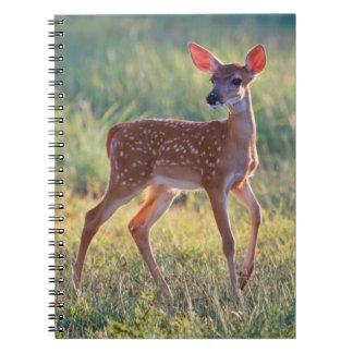 White-Tailed Deer (Odocoileus Virginianus) Fawn Notebooks