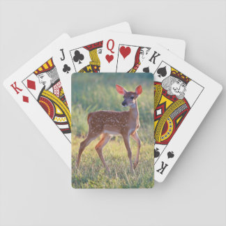 White-Tailed Deer (Odocoileus Virginianus) Fawn Playing Cards
