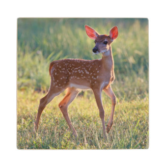 White-Tailed Deer (Odocoileus Virginianus) Fawn Wood Coaster
