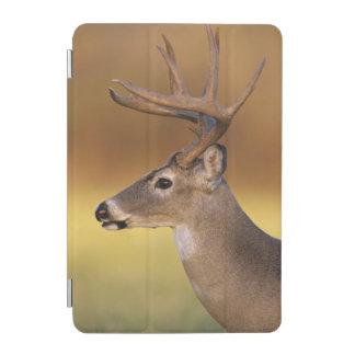 White-tailed Deer, Odocoileus virginianus, iPad Mini Cover
