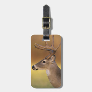 White-tailed Deer, Odocoileus virginianus, Luggage Tag