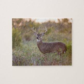 white-tailed deer (Odocoileus virginianus) male 2 Jigsaw Puzzle