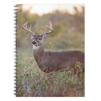 white-tailed deer (Odocoileus virginianus) male 2 Notebooks