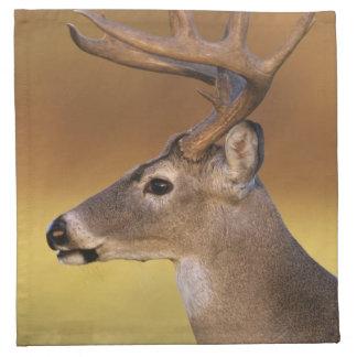 White-tailed Deer, Odocoileus virginianus, Napkin