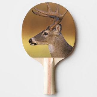 White-tailed Deer, Odocoileus virginianus, Ping Pong Paddle