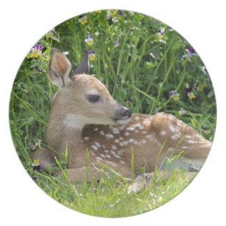 White-tailed deer (Odocoileus virginianus) Plate