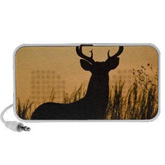 white-tailed deer Odocoileus virginianus) Notebook Speaker